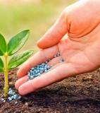 Удобрение для растений микориза
